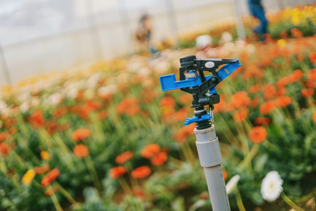 A sprinkler head in a field of flowers benefiting from the advantages of irrigation